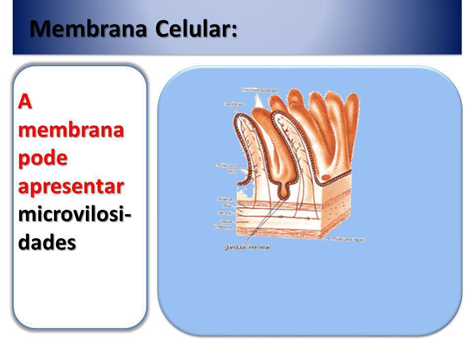 Membrana Celular: A membrana pode apresentar desmosso- mos Estruturas que mantêm as células adjacentes firmemente unidas que proporcionam uma estabilidade mecânica (queratina).
