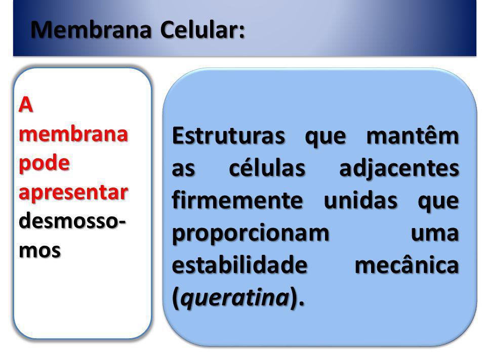 Membrana Celular: A membrana pode apresentar desmosso- mos