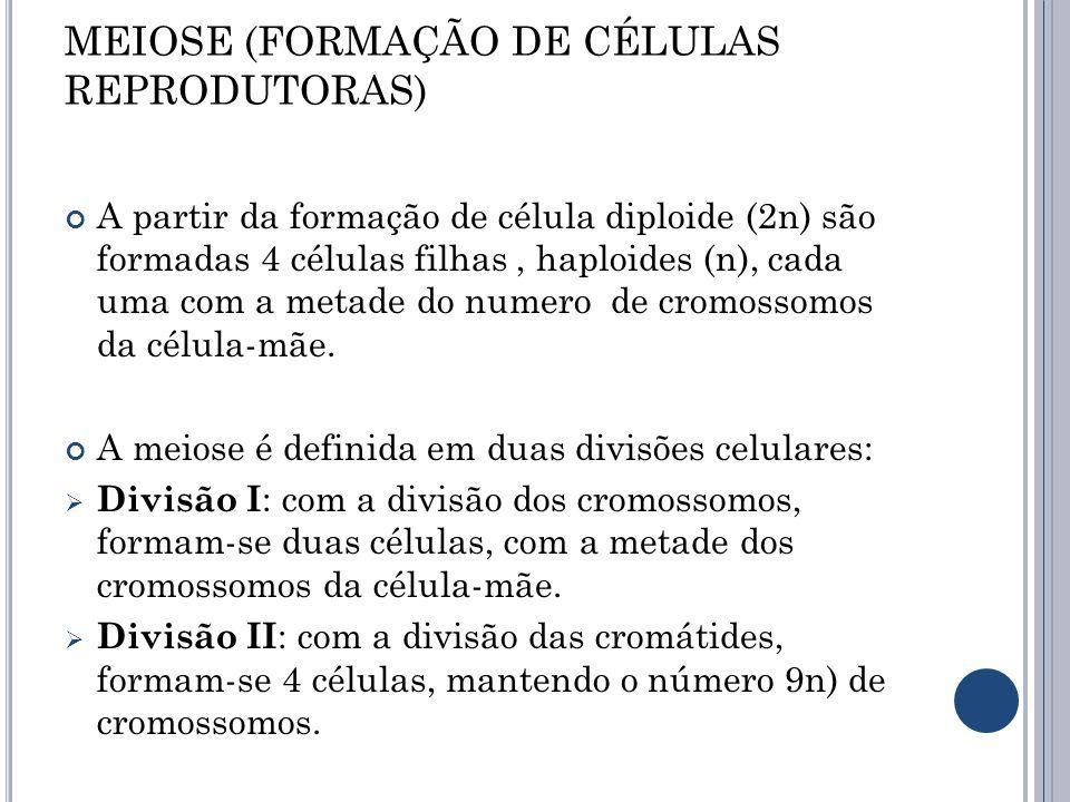 MEIOSE (FORMAÇÃO DE CÉLULAS REPRODUTORAS) A partir da formação de célula diploide (2n) são formadas 4 células filhas, haploides (n), cada uma com a me
