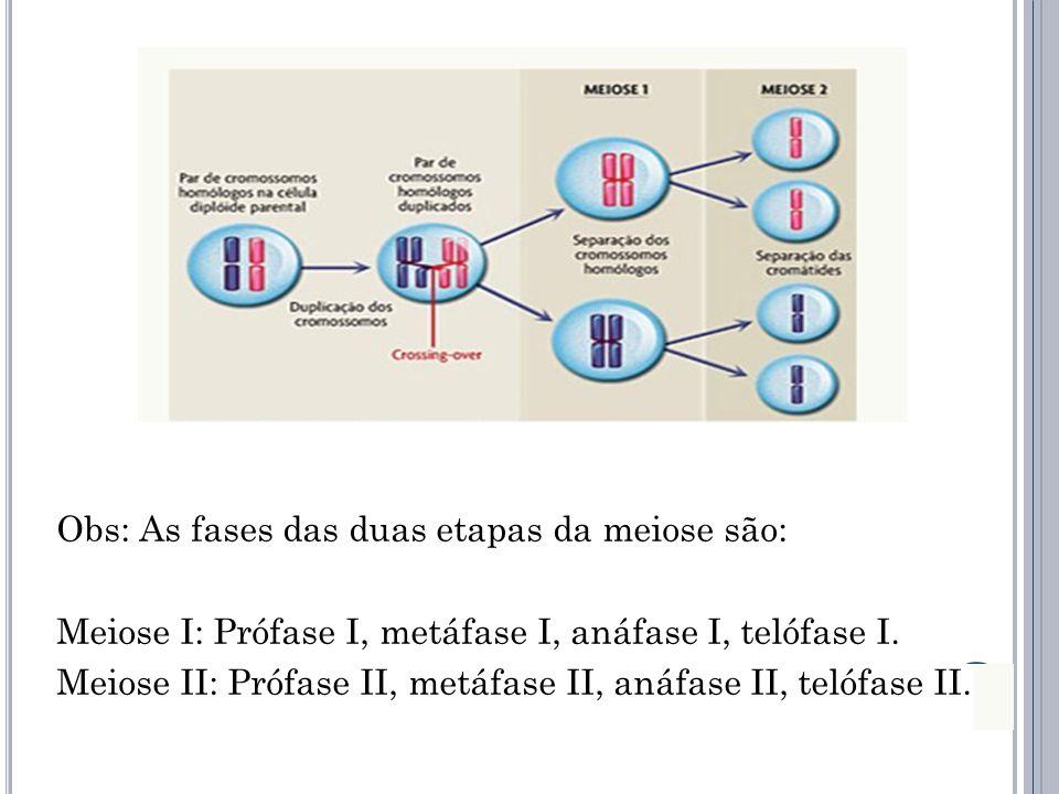 Obs: As fases das duas etapas da meiose são: Meiose I: Prófase I, metáfase I, anáfase I, telófase I. Meiose II: Prófase II, metáfase II, anáfase II, t
