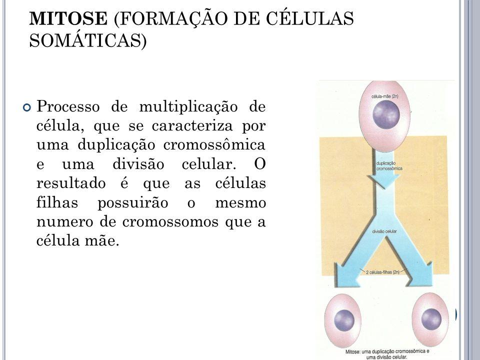 MITOSE (FORMAÇÃO DE CÉLULAS SOMÁTICAS) Processo de multiplicação de célula, que se caracteriza por uma duplicação cromossômica e uma divisão celular.