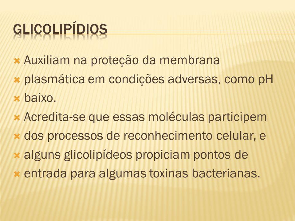 Auxiliam na proteção da membrana plasmática em condições adversas, como pH baixo.