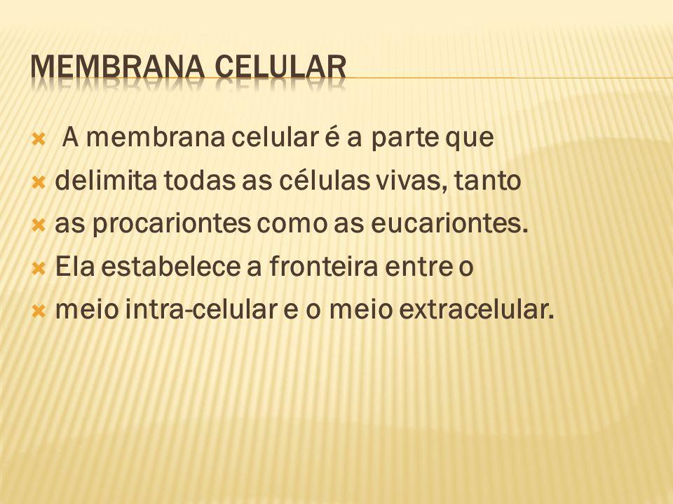 A membrana celular é a parte que delimita todas as células vivas, tanto as procariontes como as eucariontes.