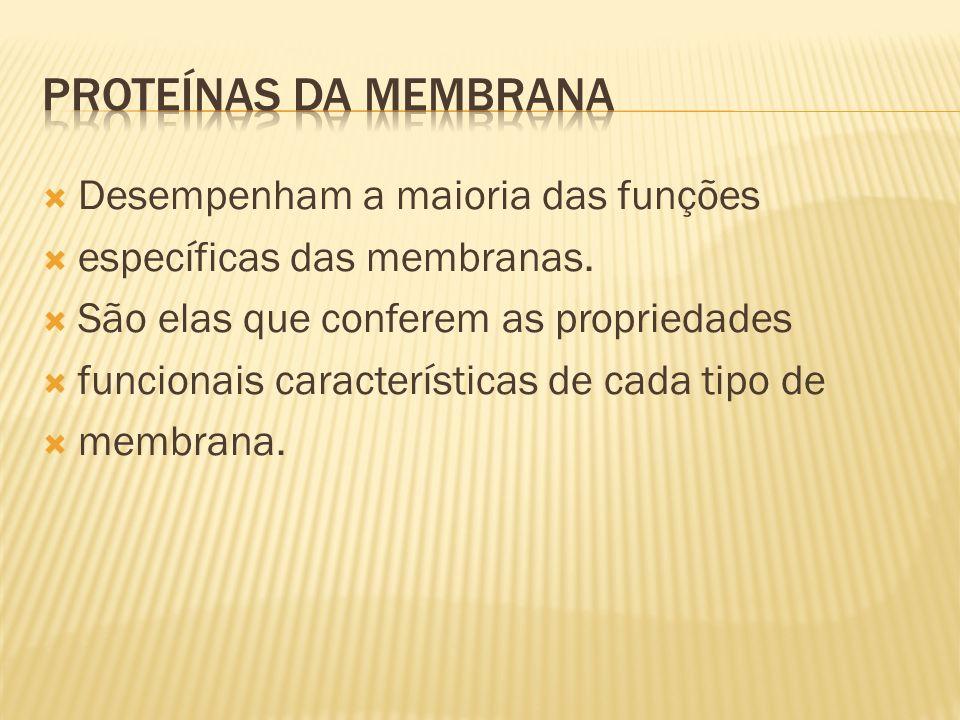 Desempenham a maioria das funções específicas das membranas.