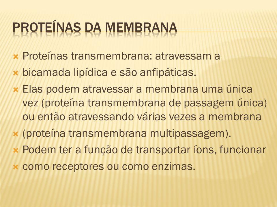 Proteínas transmembrana: atravessam a bicamada lipídica e são anfipáticas.