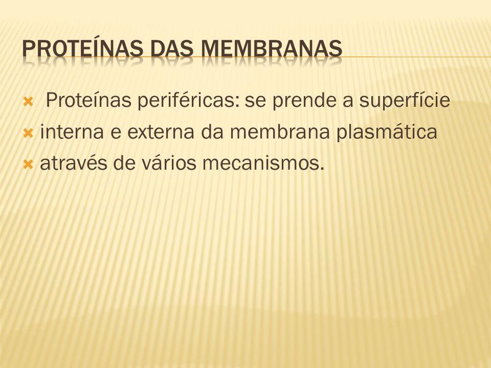 Proteínas periféricas: se prende a superfície interna e externa da membrana plasmática através de vários mecanismos.