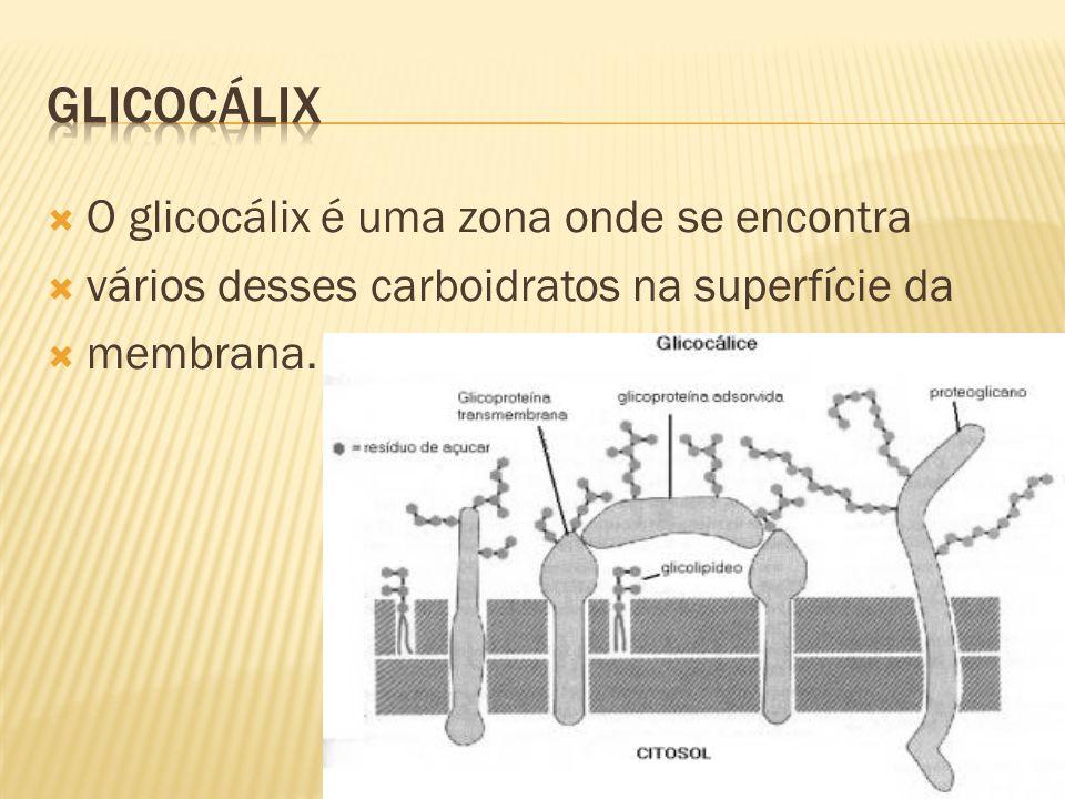 O glicocálix é uma zona onde se encontra vários desses carboidratos na superfície da membrana.