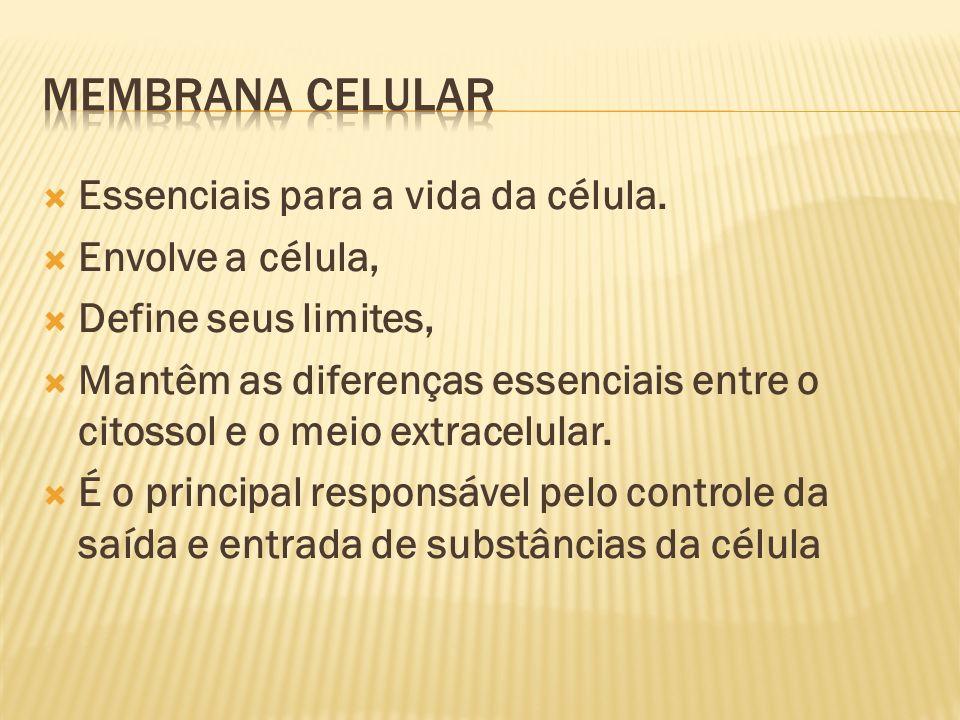 Essenciais para a vida da célula.