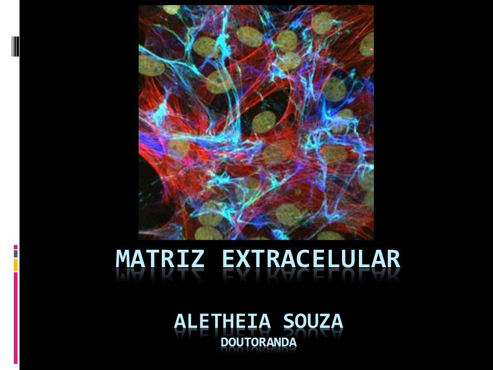 Matriz extracelular Definição Componente dos tecidos juntamente com as celulas Produzida pelas celulas Variavel de acordo com o tecido