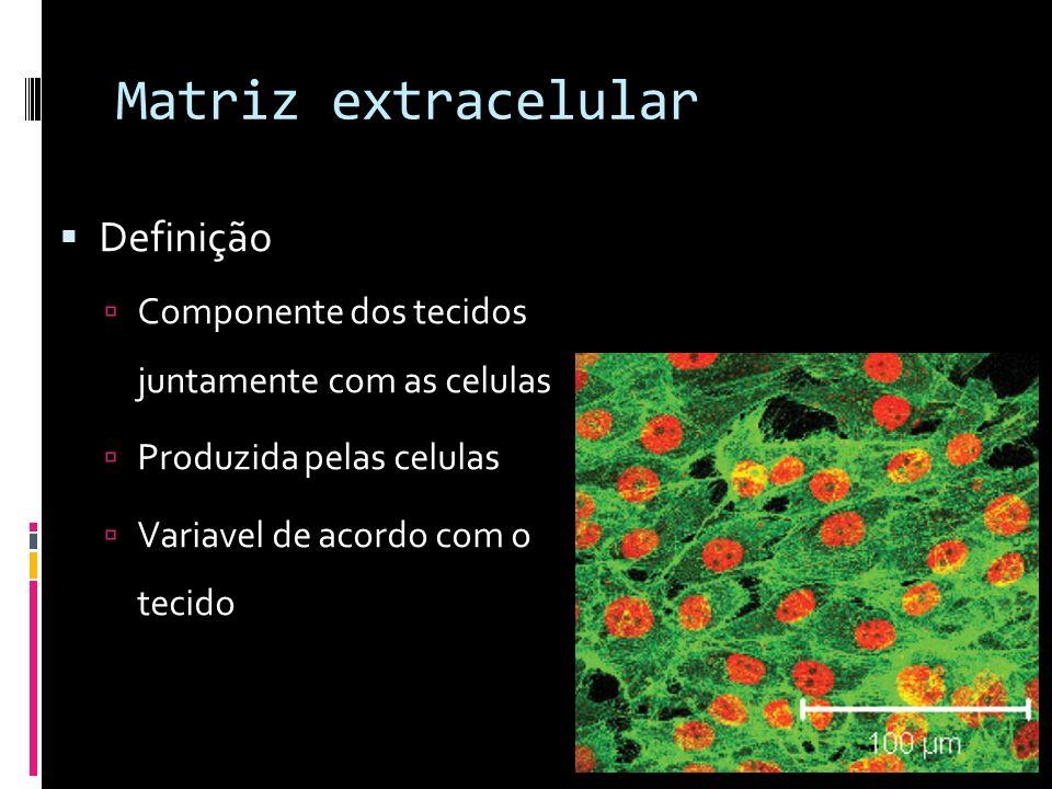 Matriz extracelular Diferença entre os tecidos Tecido conjuntivo Abundante