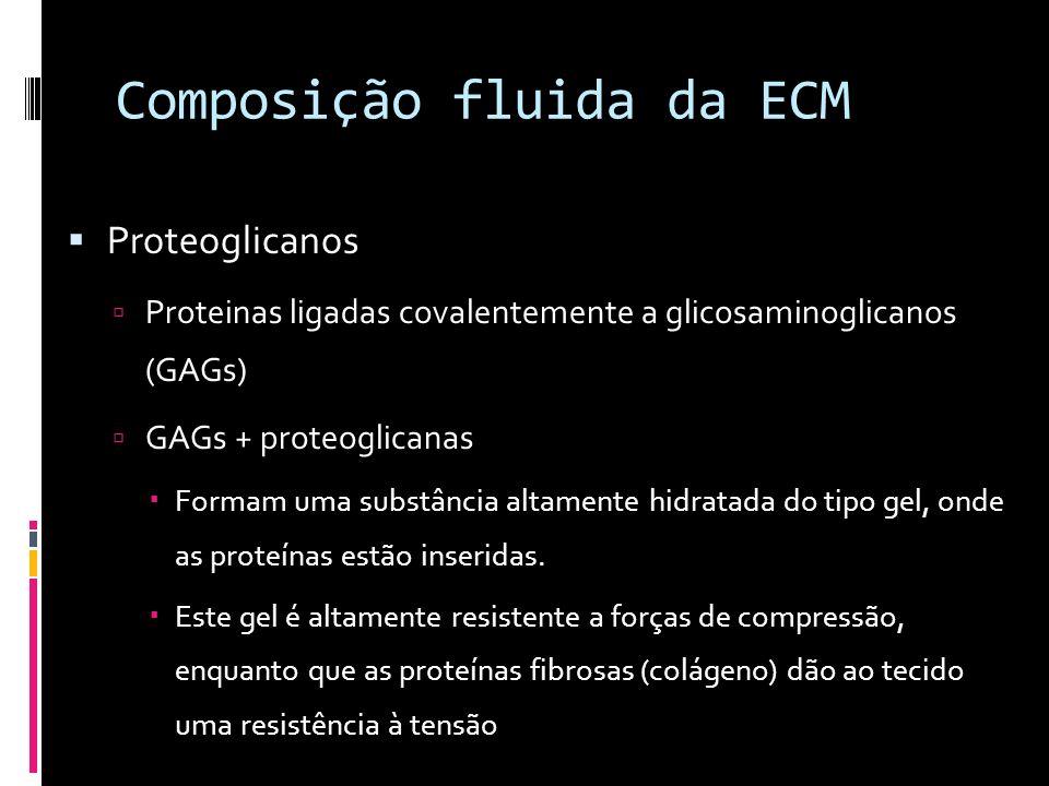 Composição fluida da ECM Proteoglicanos Proteinas ligadas covalentemente a glicosaminoglicanos (GAGs) GAGs + proteoglicanas Formam uma substância alta