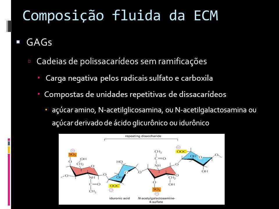 Composição fluida da ECM GAGs Cadeias de polissacarídeos sem ramificações Carga negativa pelos radicais sulfato e carboxila Compostas de unidades repe