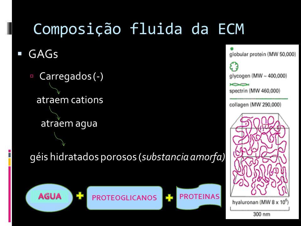 Composição fluida da ECM GAGs Carregados (-) atraem cations atraem agua géis hidratados porosos (substancia amorfa) agua PROTEOGLICANOS PROTEINAS