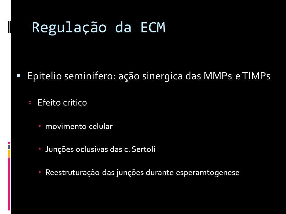 Regulação da ECM Epitelio seminifero: ação sinergica das MMPs e TIMPs Efeito critico movimento celular Junções oclusivas das c. Sertoli Reestruturação