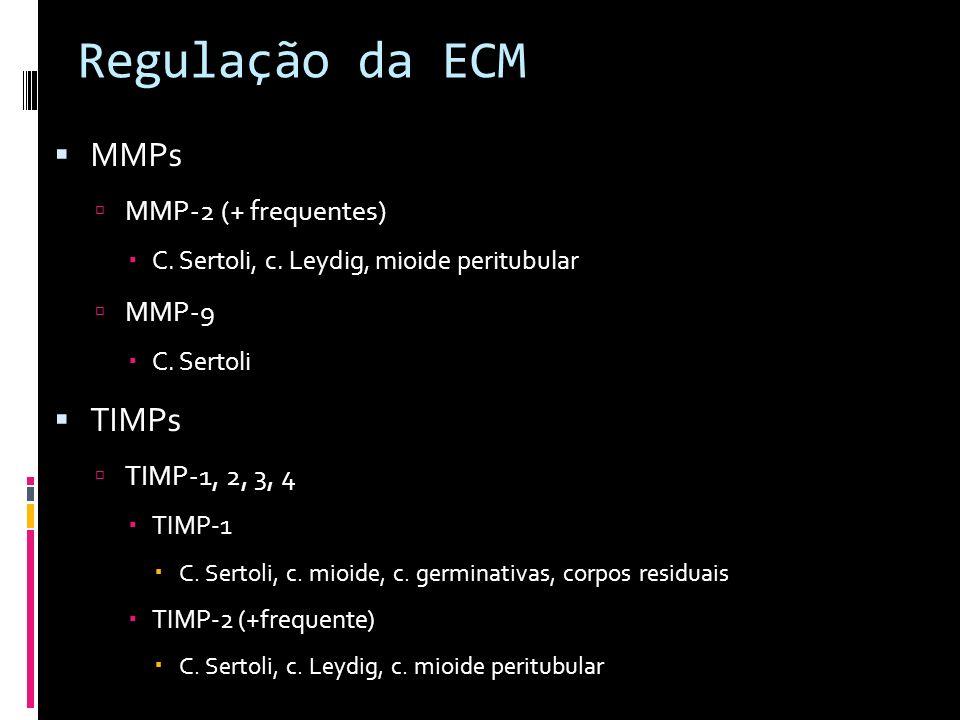 Regulação da ECM MMPs MMP-2 (+ frequentes) C. Sertoli, c. Leydig, mioide peritubular MMP-9 C. Sertoli TIMPs TIMP-1, 2, 3, 4 TIMP-1 C. Sertoli, c. mioi