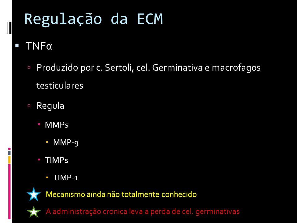 Regulação da ECM TNFα Produzido por c. Sertoli, cel. Germinativa e macrofagos testiculares Regula MMPs MMP-9 TIMPs TIMP-1 Mecanismo ainda não totalmen