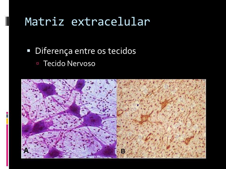 Matriz extracelular Composição Fibrosos Colagenos fibrilares Proteinas de ligação Fibronectina, laminina, tenascina, entactina Microfibrilares Colageno IV, elastina, fibrilina Fluidos Proteoglicanos