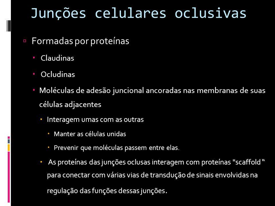 Junções celulares oclusivas Formadas por proteínas Claudinas Ocludinas Moléculas de adesão juncional ancoradas nas membranas de suas células adjacente