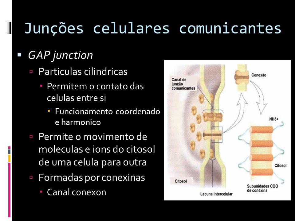 Junções celulares comunicantes GAP junction Particulas cilindricas Permitem o contato das celulas entre si Funcionamento coordenado e harmonico Permit