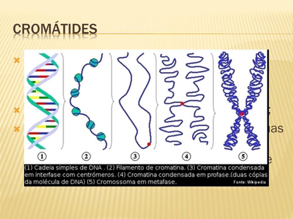 Os filamentos filhos espiralados e condensados que constituem cada cromossomo são idênticos; Cada filamento recebe o nome de cromátide; Um cromossomo duplicado é formado por duas cromátides-irmãs, com a duplicação do centrômero e separação, serão chamados de cromossomos;