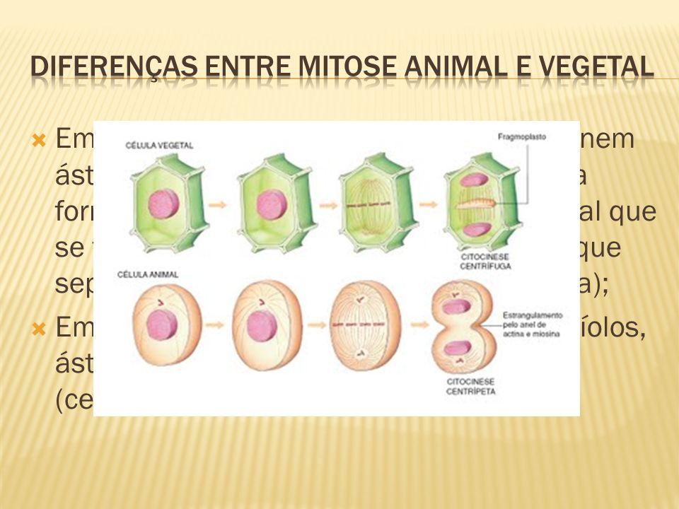 Em vegetais superiores não há centríolo, nem áster e a divisão do citoplasma se dá pela formação de vesículas na região equatorial que se fundem forma