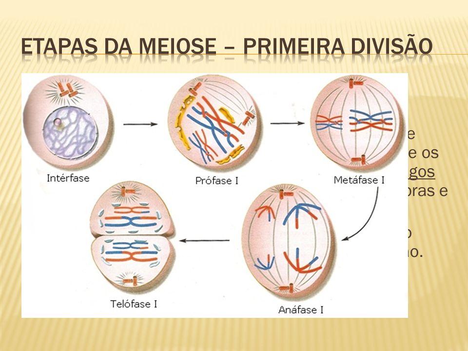 Obs: lembrando que tudo começa com a intérfase (duplicação do material genético); Prófase I: condensação da cromatina, centríolos se deslocam para lados opostos, aparecem os fusos e os nucléolos desaparecem.