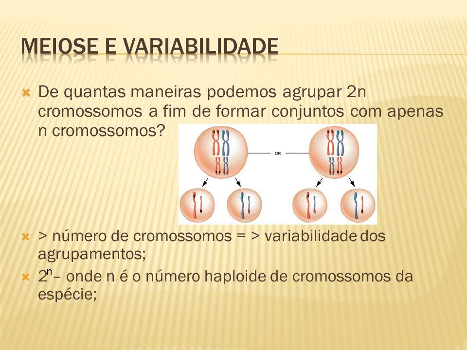 De quantas maneiras podemos agrupar 2n cromossomos a fim de formar conjuntos com apenas n cromossomos? > número de cromossomos = > variabilidade dos a