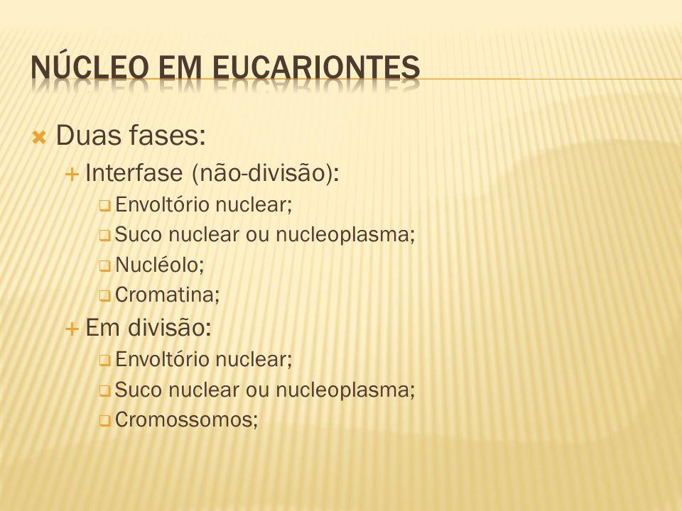 Duas fases: Interfase (não-divisão): Envoltório nuclear; Suco nuclear ou nucleoplasma; Nucléolo; Cromatina; Em divisão: Envoltório nuclear; Suco nuclear ou nucleoplasma; Cromossomos;