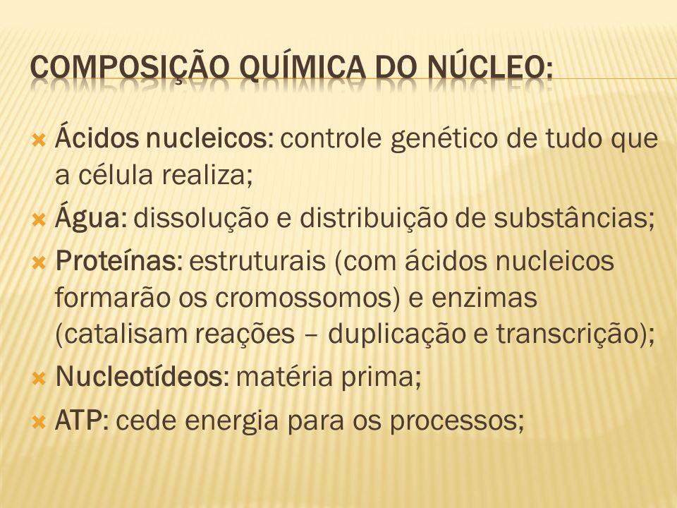 Ácidos nucleicos: controle genético de tudo que a célula realiza; Água: dissolução e distribuição de substâncias; Proteínas: estruturais (com ácidos n