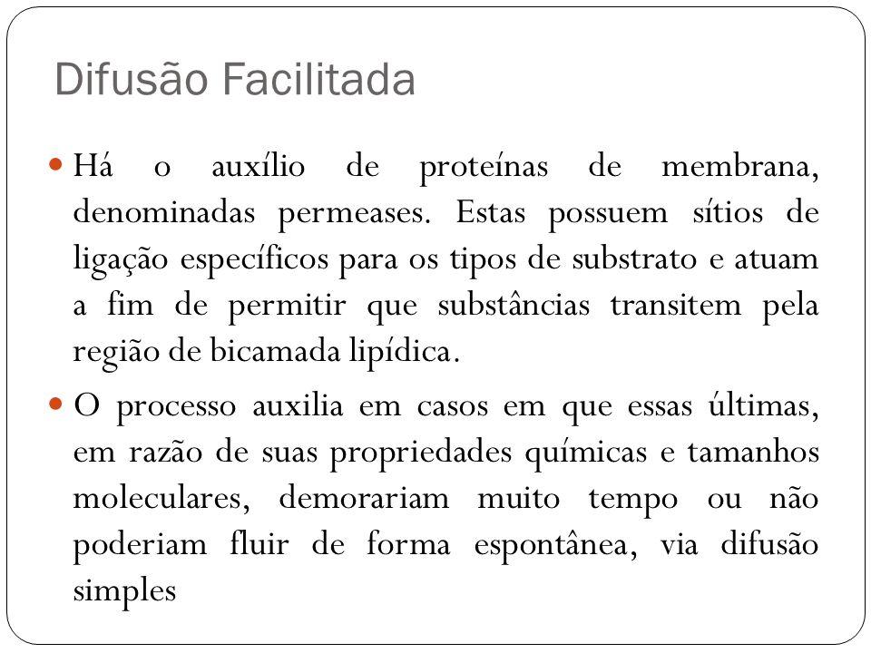 Difusão Facilitada Há o auxílio de proteínas de membrana, denominadas permeases. Estas possuem sítios de ligação específicos para os tipos de substrat