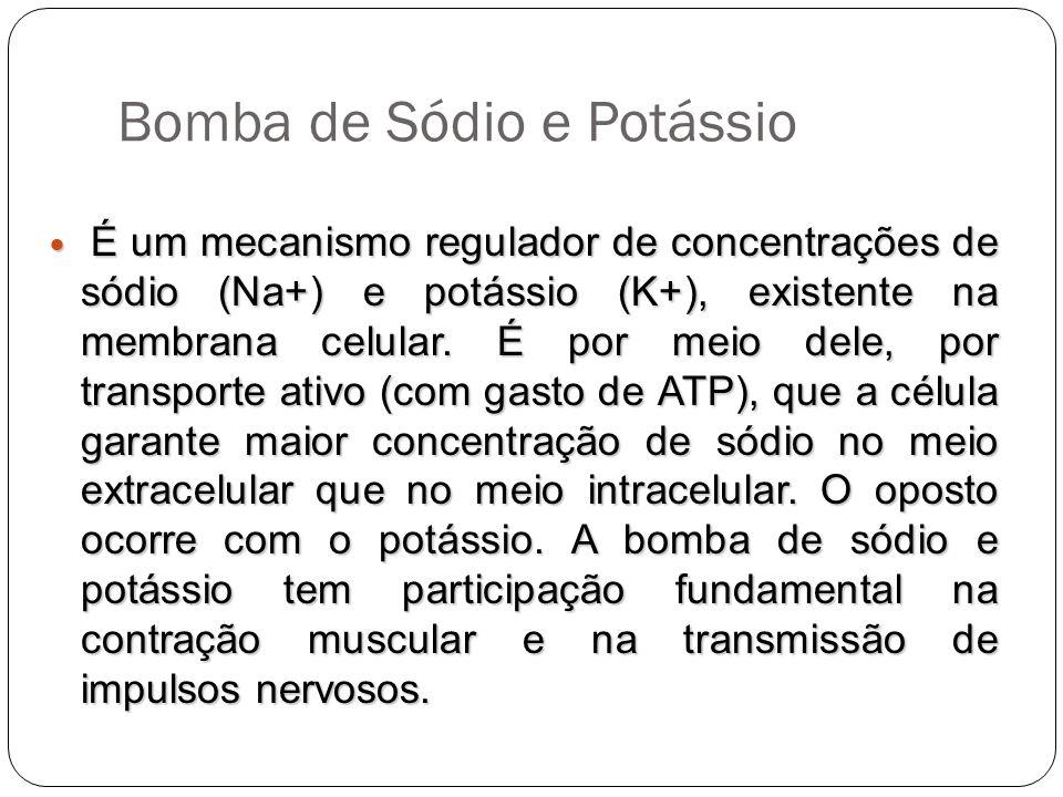 Bomba de Sódio e Potássio É um mecanismo regulador de concentrações de sódio (Na+) e potássio (K+), existente na membrana celular. É por meio dele, po