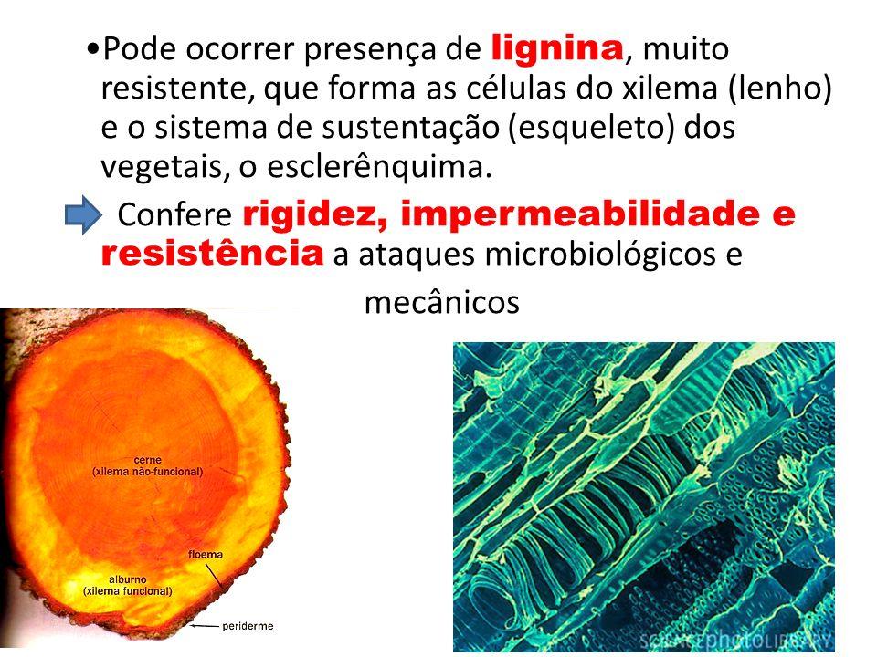 Pode ocorrer presença de lignina, muito resistente, que forma as células do xilema (lenho) e o sistema de sustentação (esqueleto) dos vegetais, o esclerênquima.