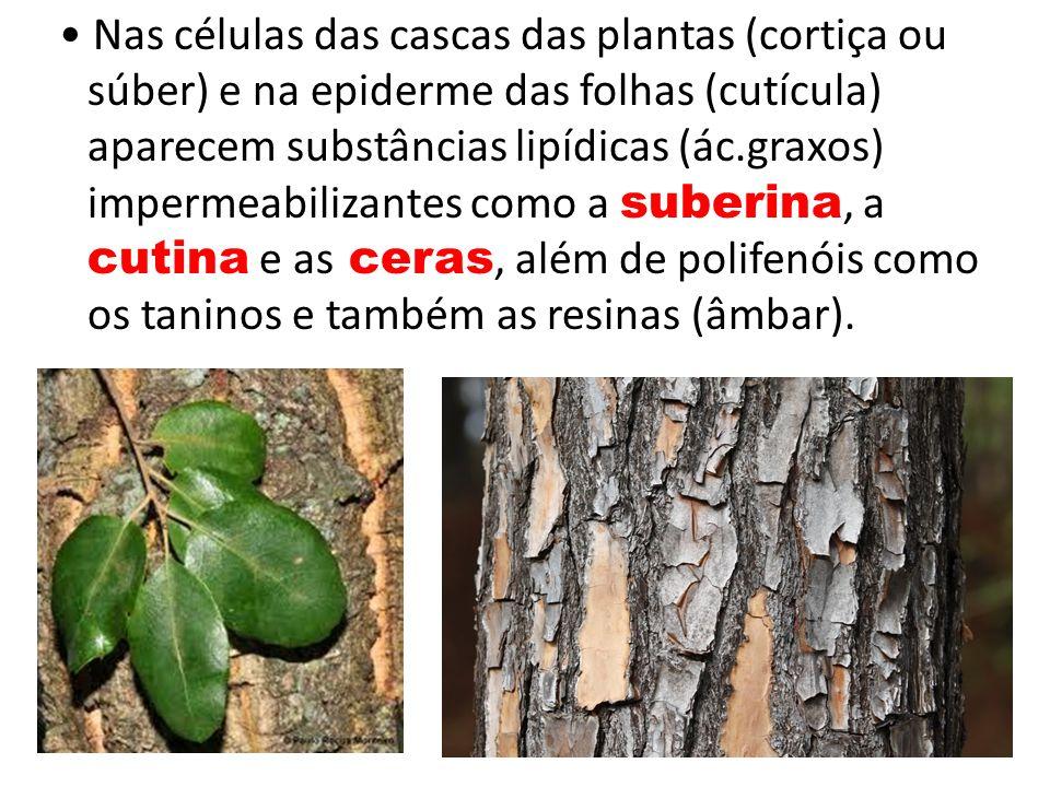 Nas células das cascas das plantas (cortiça ou súber) e na epiderme das folhas (cutícula) aparecem substâncias lipídicas (ác.graxos) impermeabilizantes como a suberina, a cutina e as ceras, além de polifenóis como os taninos e também as resinas (âmbar).