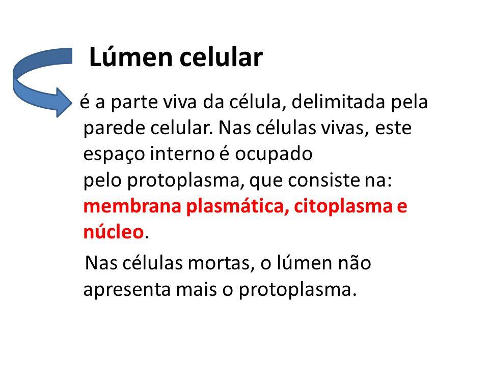 Lúmen celular é a parte viva da célula, delimitada pela parede celular.