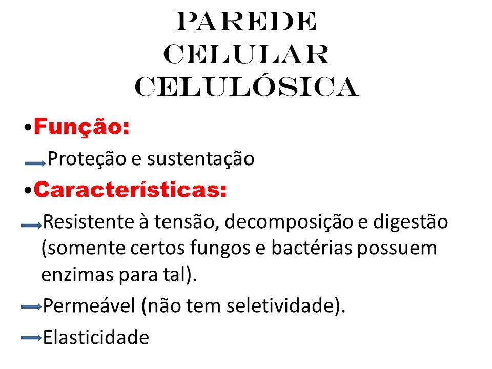 Parede Celular Celulósica Função: Proteção e sustentação Características: Resistente à tensão, decomposição e digestão (somente certos fungos e bactérias possuem enzimas para tal).