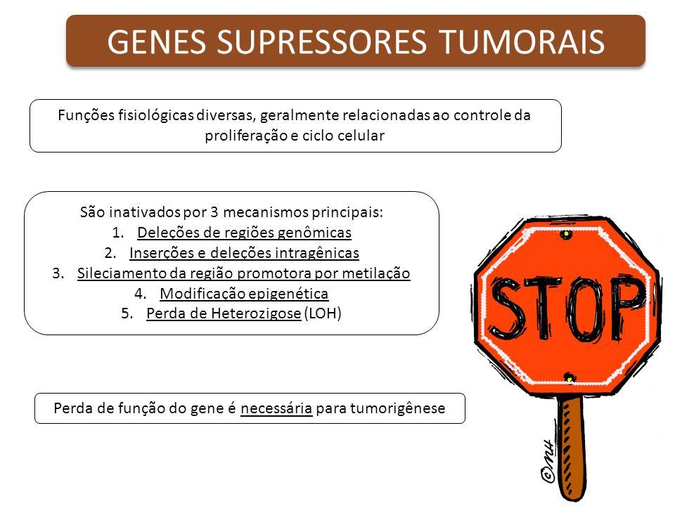 GENES SUPRESSORES TUMORAIS Funções fisiológicas diversas, geralmente relacionadas ao controle da proliferação e ciclo celular São inativados por 3 mec