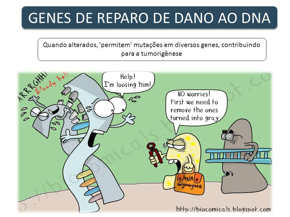 GENES DE REPARO DE DANO AO DNA Quando alterados, permitem mutações em diversos genes, contribuindo para a tumorigênese