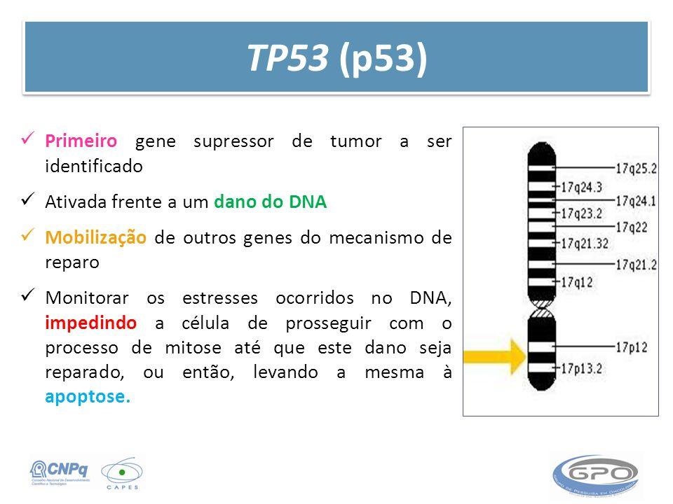 TP53 (p53) Primeiro gene supressor de tumor a ser identificado Ativada frente a um dano do DNA Mobilização de outros genes do mecanismo de reparo Moni