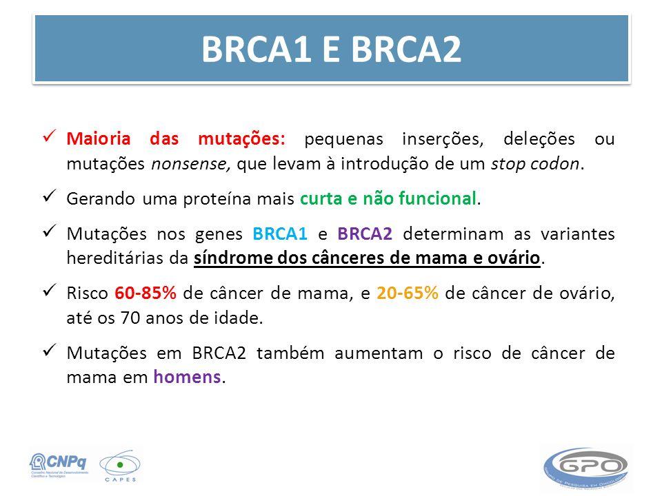 BRCA1 E BRCA2 Maioria das mutações: pequenas inserções, deleções ou mutações nonsense, que levam à introdução de um stop codon. Gerando uma proteína m