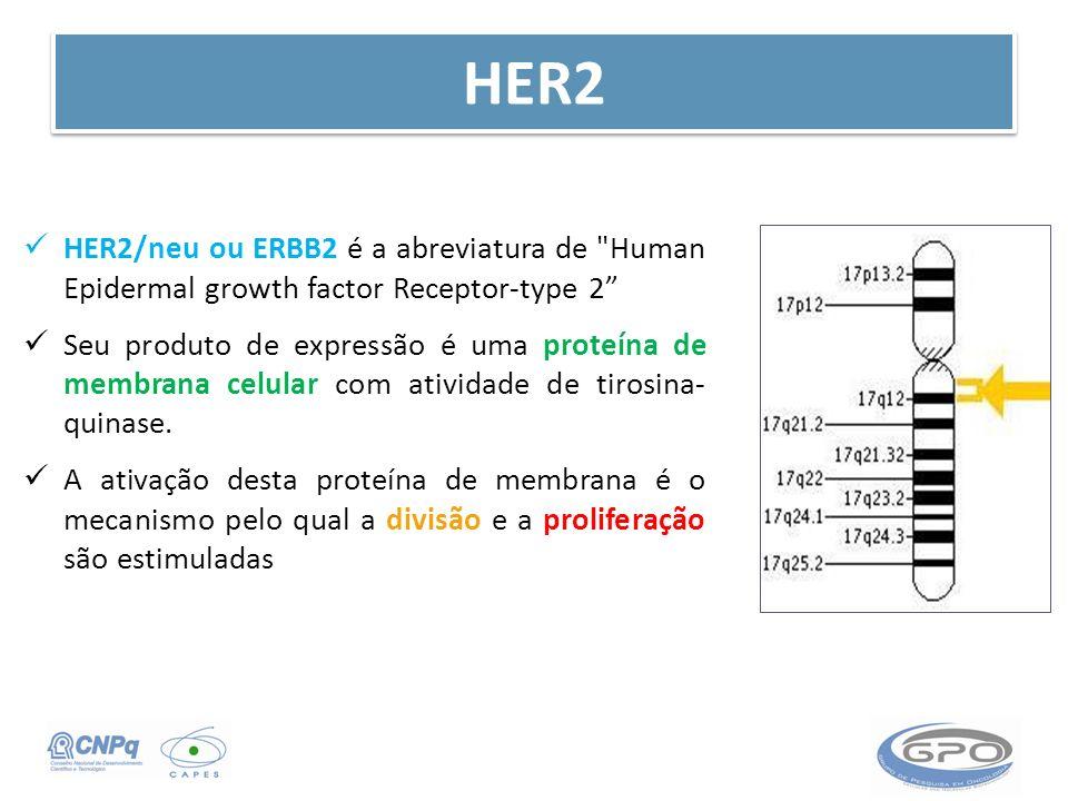 HER2 HER2/neu ou ERBB2 é a abreviatura de