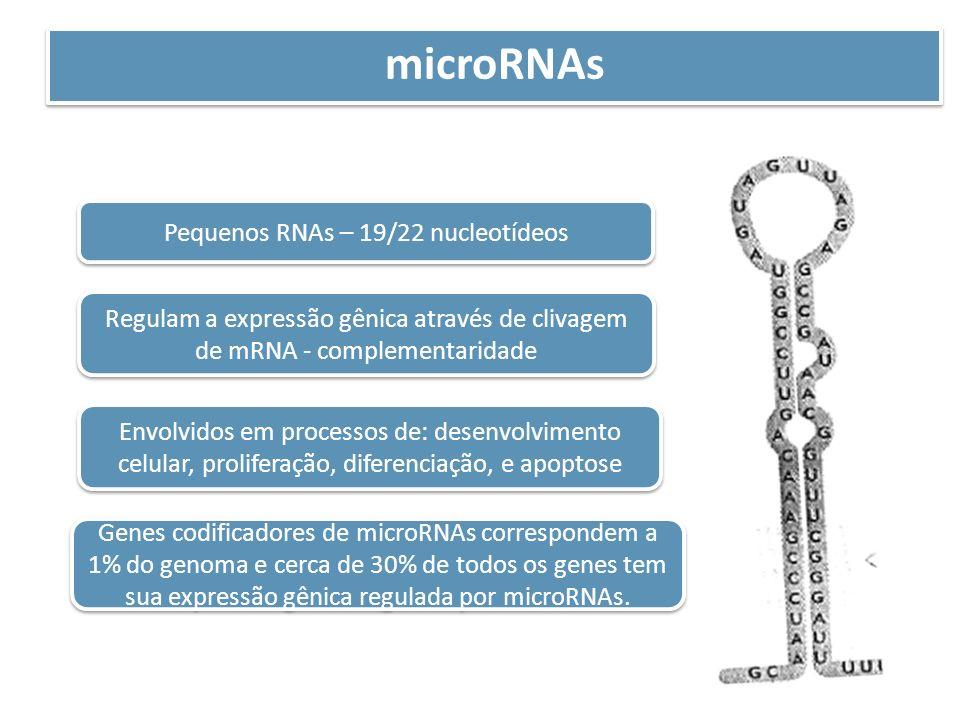 microRNAs Pequenos RNAs – 19/22 nucleotídeos Regulam a expressão gênica através de clivagem de mRNA - complementaridade Envolvidos em processos de: de