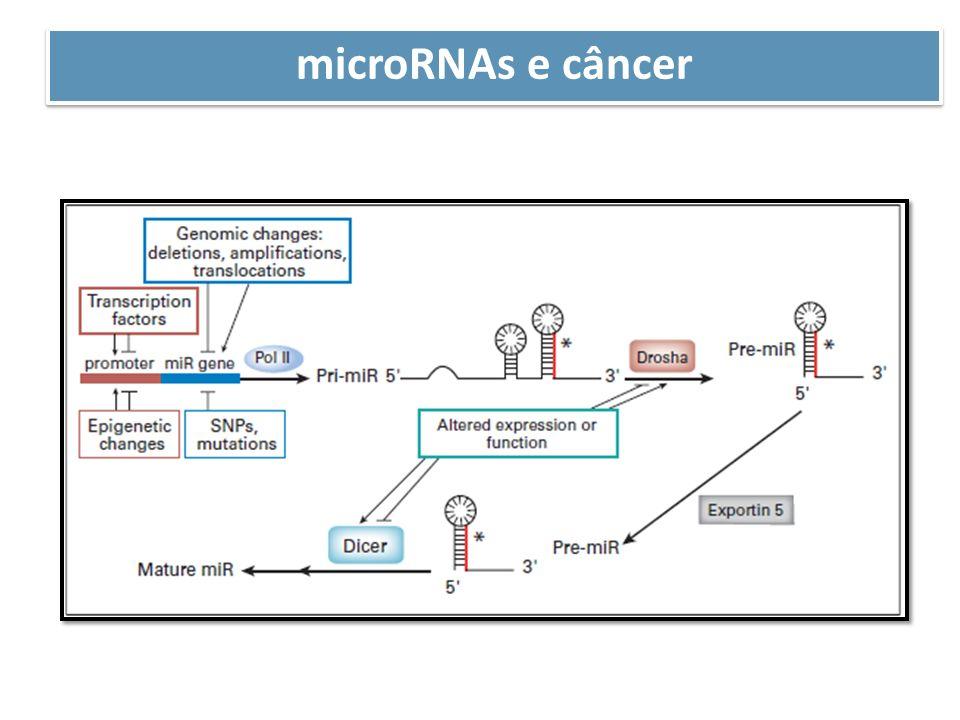 microRNAs e câncer