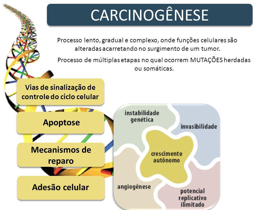 Formação de vasos sanguíneos CARCINOGÊNESE Processo lento, gradual e complexo, onde funções celulares são alteradas acarretando no surgimento de um tu