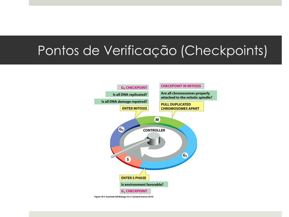 Pontos de Verificação (Checkpoints)
