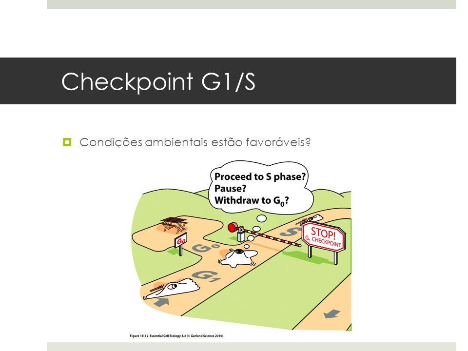 Checkpoint G1/S Condições ambientais estão favoráveis?