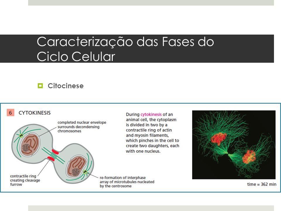Caracterização das Fases do Ciclo Celular Citocinese