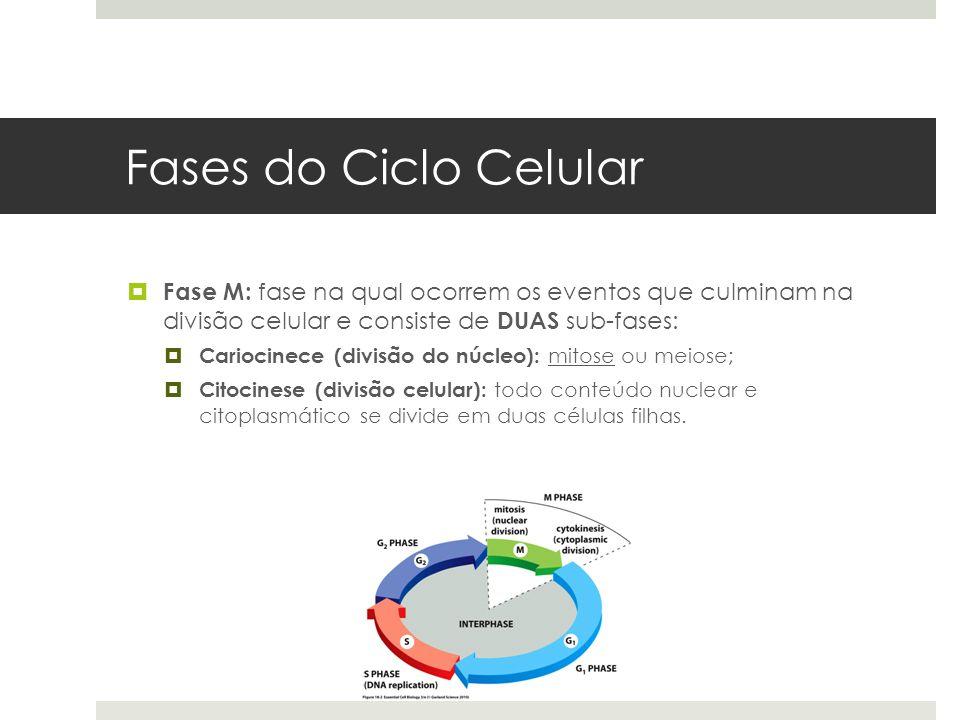 Fases do Ciclo Celular Fase M: fase na qual ocorrem os eventos que culminam na divisão celular e consiste de DUAS sub-fases: Cariocinece (divisão do n