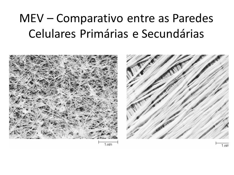 MEV – Comparativo entre as Paredes Celulares Primárias e Secundárias