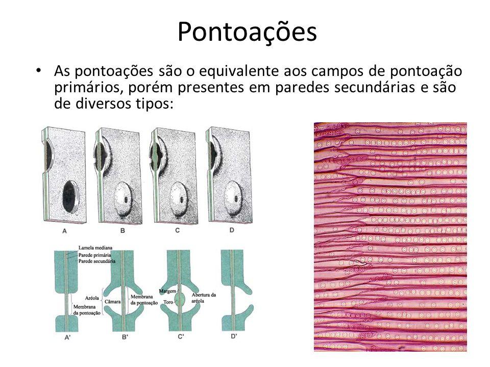 Pontoações As pontoações são o equivalente aos campos de pontoação primários, porém presentes em paredes secundárias e são de diversos tipos: