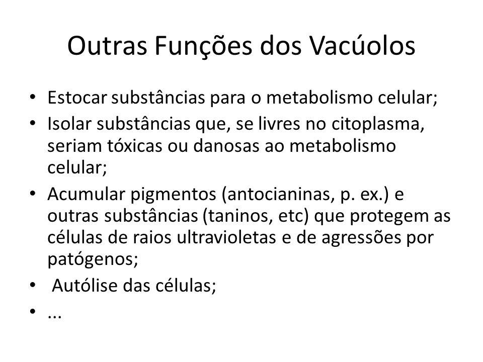 Outras Funções dos Vacúolos Estocar substâncias para o metabolismo celular; Isolar substâncias que, se livres no citoplasma, seriam tóxicas ou danosas